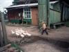 siberia-little-boy-following-geese_0