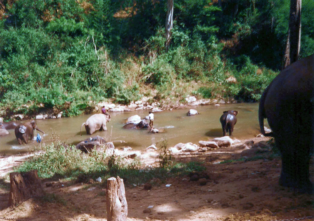 thailand-elephants-in-thai-jungle_0